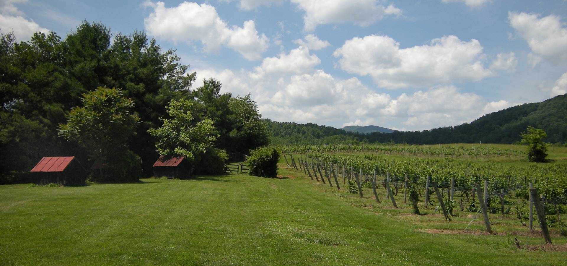 Sharp Rock Vineyards