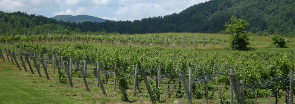 Sharp Rock Vineyards, Sperryville, VA